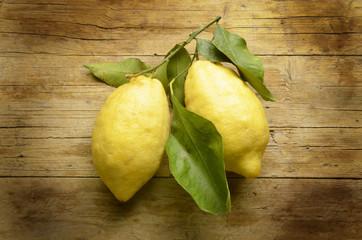 Citrus × limon Λεμόνι Citron Lemon Limone Expo Milano 2015