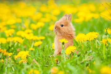 Little rabbit sitting in flowers