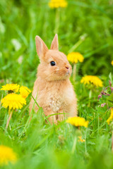 Little rabbit sitting in the grass