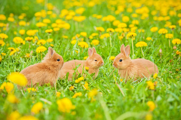 Three little rabbits outdoors