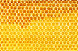 natural honey in honeycomb background