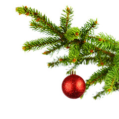 Decorative ball on fir branch