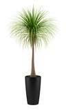 potted palm tree isolated on white background