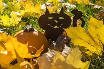 Silhouette of a Cat with a Pumpkin Amongst Fallen Leaves