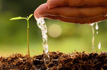 Agriculture,Tree,Seeding,Seedling