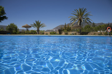 swimming pool with palms