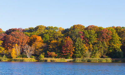 Trees along a lake in the fall