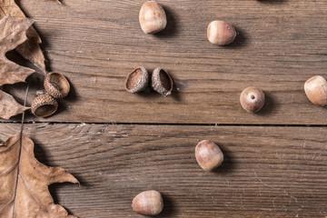 Acorn cupule on wooden desk