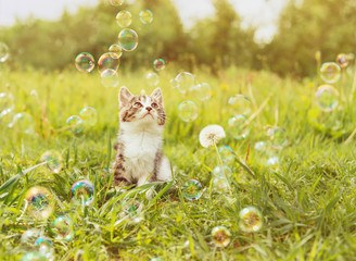 Cute kitten looking at soap bubbles