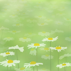 Background with chamomile flowers on the field