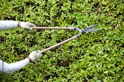 剪定ばさみを使う植木職人
