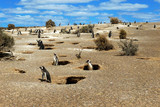 Colony of Magellanic Penguins at Punta Tombo, Argentina