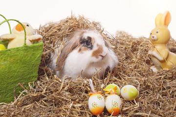 lapin de Pâques bélier nain