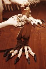 Dragon reptile skeleton foot 2