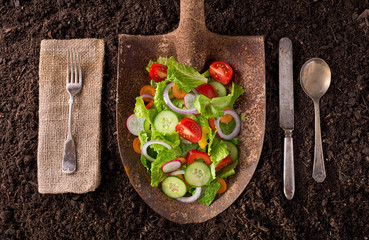 Locally grown garden salad on rusted shovel.