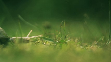 Snail in Garden #1