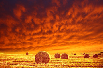 golden field and red sky