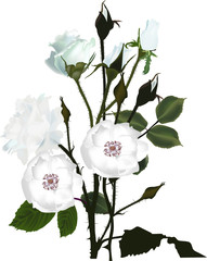bunch of white brier and rose flowers