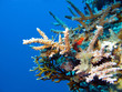 colorful coral reef at the bottom of tropical sea