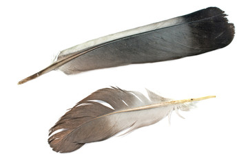 Two feathers isolated on white