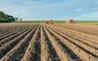 Leinwanddruck Bild - Harvesting potatoes