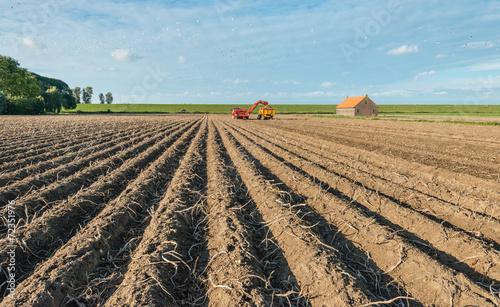 Leinwanddruck Bild Harvesting potatoes