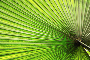 Illuminated tropical palm leaf