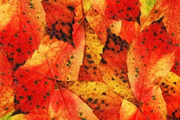 Herbst-Farben-Blätter