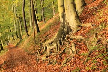 Herbstlicher Wald im Nationalpark Sächs. Schweiz
