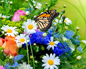 Camomiles Roses Butterflies Flowers