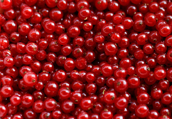 Background red currants