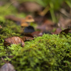 nature background with autum fallen leaves and green moss