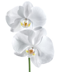 white orchid - wellness of couple concept