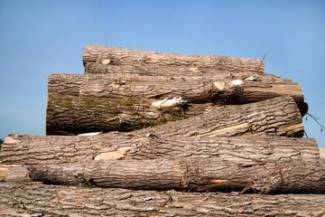 Holz *** Baumstämme-2