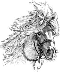 pony head