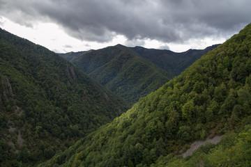 Robledal. Reserva Natural Integral Muniellos, Asturias.
