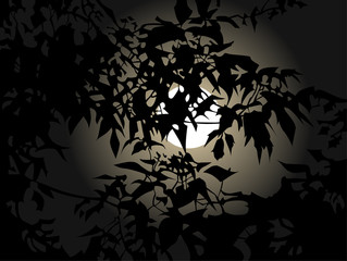 full moon at night through the leaves
