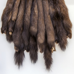 The skins of a sable prepared for tailoring of a product