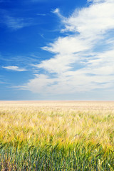 Arable Field under Blue Sky