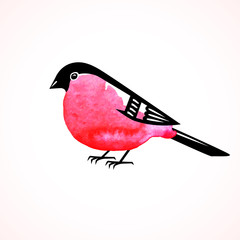 Watercolor bullfinch on white background. Vector illustration.