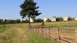 Obrazy na płótnie, fototapety, zdjęcia, fotoobrazy drukowane : Horse trot  in nature