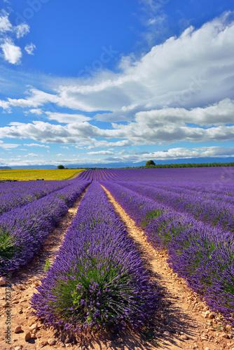 Lavender field © Oleg Znamenskiy