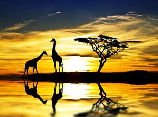 siluetas a contraluz de unas jirafas en el lago
