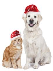 Hund und Katze mit Nikolausmütze