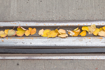 yellow foliage on the rails
