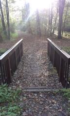 Waldbrücke in Licht