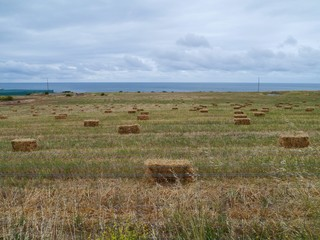 A landscape with hay bales in Australia