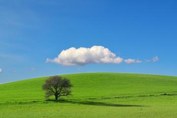 Bella collina con un albero e una nuvola - Pianeta terra - Globo
