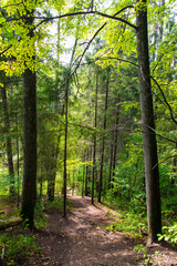 scenic and beautiful tourism trail in the woods near river