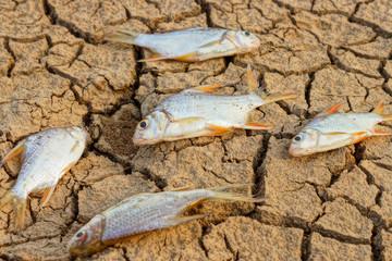 fish die on crack earth